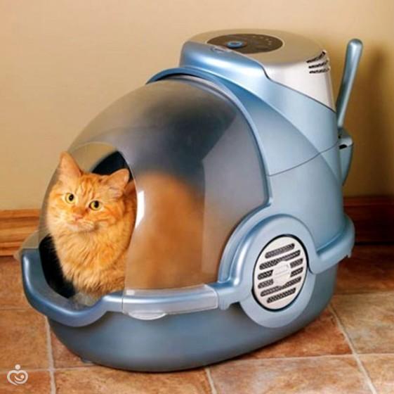 cat behaviour specialist hampshire