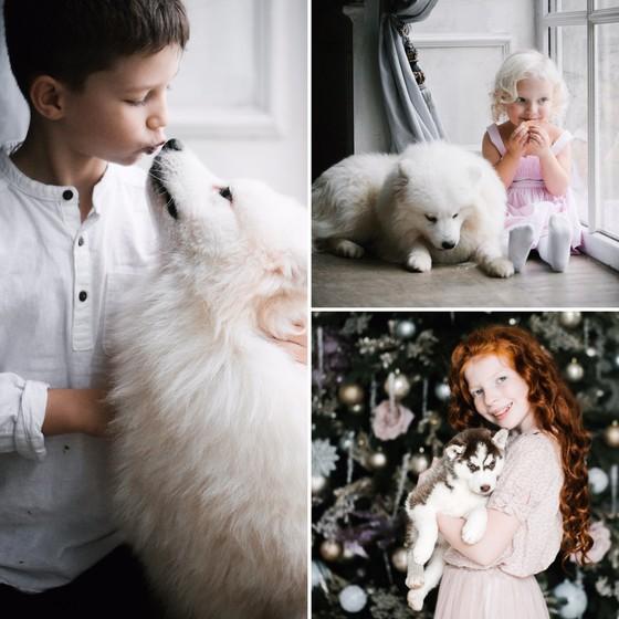 Новогодняя фотосессия с собачками