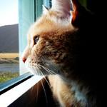 кот-смотрит-в-окно-1
