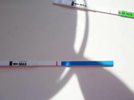 Тест на беременость