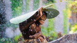 indonesia_monkey_wpo